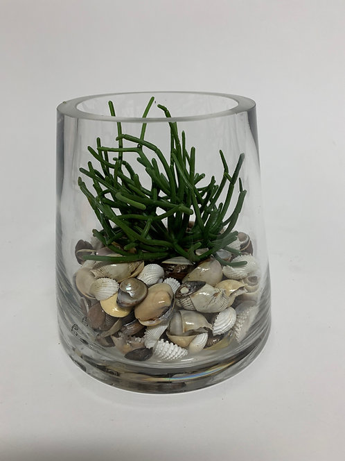 3115 SHELL/GRAY PENCIL CACTUS IN MD GLASS