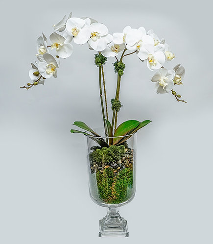 """3003 Double Orchid in Glass Urn 34""""x15"""""""