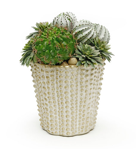3536 NILLY POT CACTUS MIX