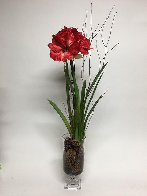 2808 Red Amaryllis in Glass Urn