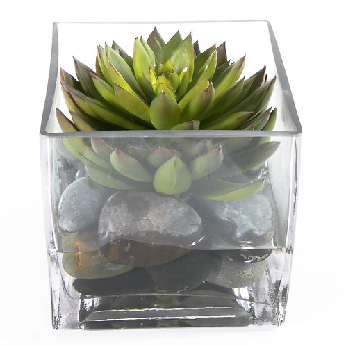 "2739 Succulent in 5"" Sq. Glass 5x5"