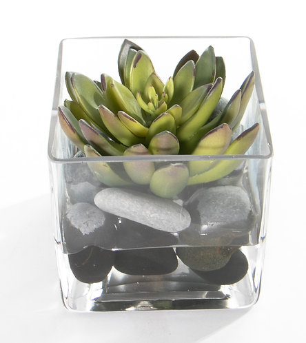 """2738 Succulent in 4"""" Sq. Glass 4x4"""