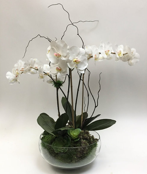 2574 Triple Phal/Succulents in Glass Bowl 30x33