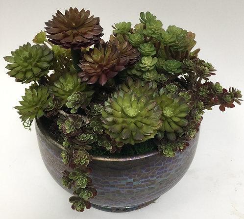 2771 Succulent in Sm Spectrum Pot 10x10