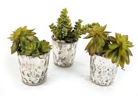 2615 S/3 Succulents in Mercury Votives 5x3