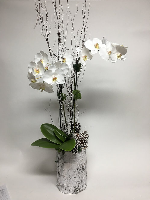 2813 Winter Orchid in Birch Pot