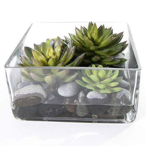 2740 Succulents in Sq. Glass 4x8