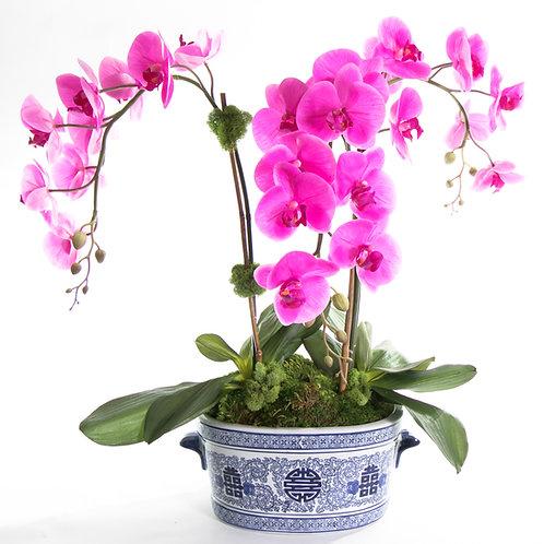 2554 Fushia Orchid in Blue & White Ceramic 27x29