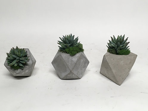 """3424 (SET OF 3) AGAVE IN SM GEO POTS 4""""X5"""""""