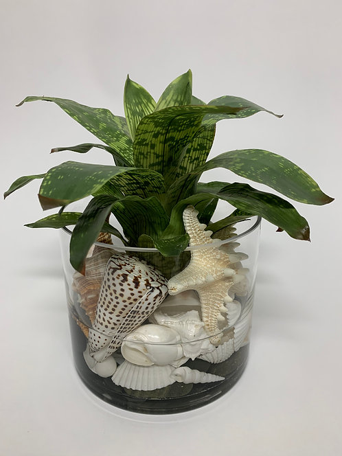 "3124 SHELL BROMELIAD IN 6"" GLASS"