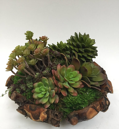 2777 Succulents in Sm Root Bowl 12x8