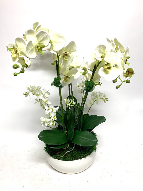"3445 PALE GREEN ORCHIDS IN MD WHITE BOWL 16""X26"""