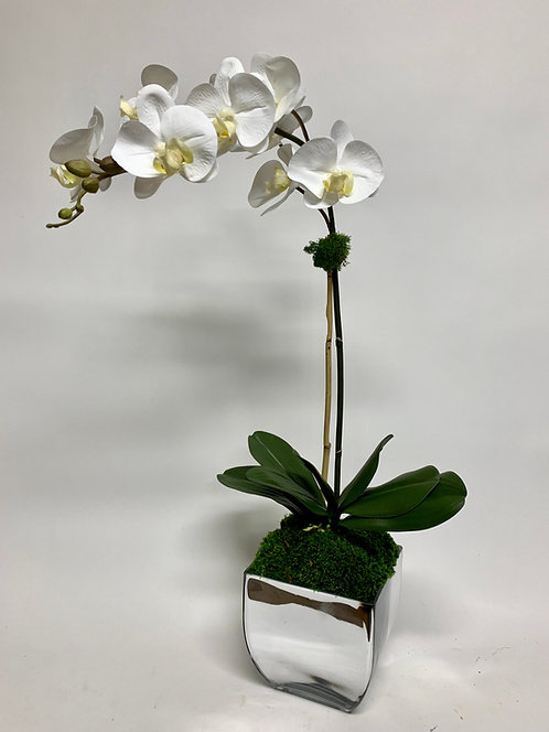 3013 ORCHID IN SILVER GLASS