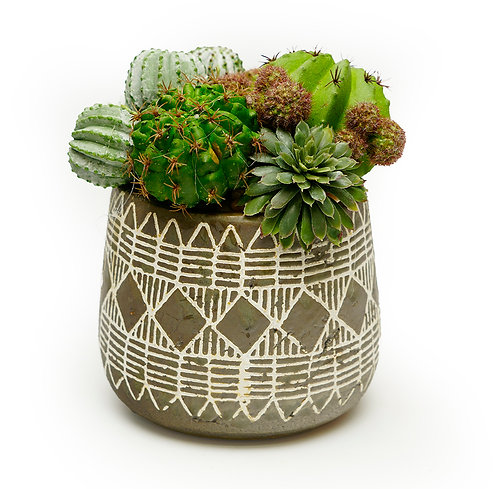 3535 Tribal Pot with Cacti and Succulents