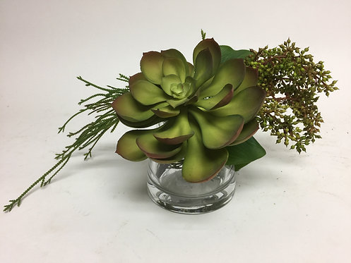 2784 Succulents in Sm glass 11x9