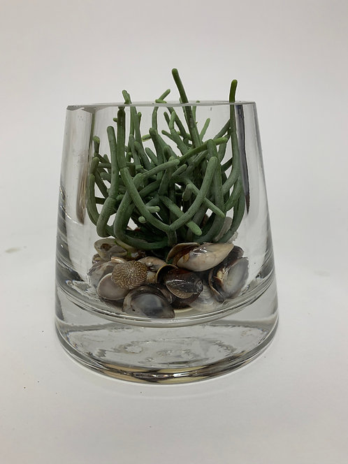 3113 SHELL/GRAY PENCIL CACTUS IN SM GLASS