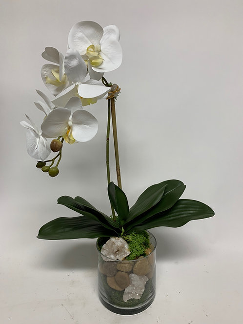 """2509 White Orchid w/Stone Crystal in Glass 23"""""""