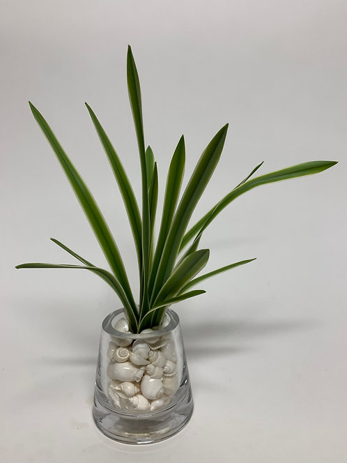 3116 SM VARIGATED GRASS/SHELL IN GLASS
