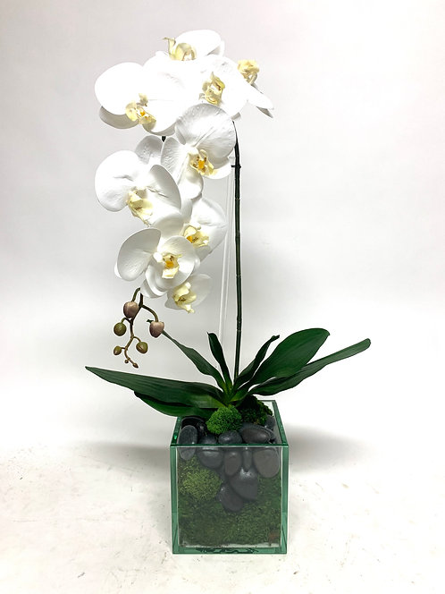 "3448 PHAL IN 6.5"" GLASS CUBE"