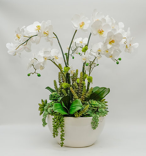 3460 ORCHIDS/SUCCULENTS IN LG OVAL POT