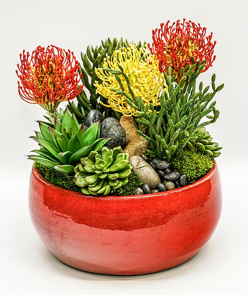 3520 RED/YELLOW PROTEA SUCCULENT BOWL