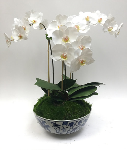 2333 Triple white phal in Blue & White Bowl 26x27