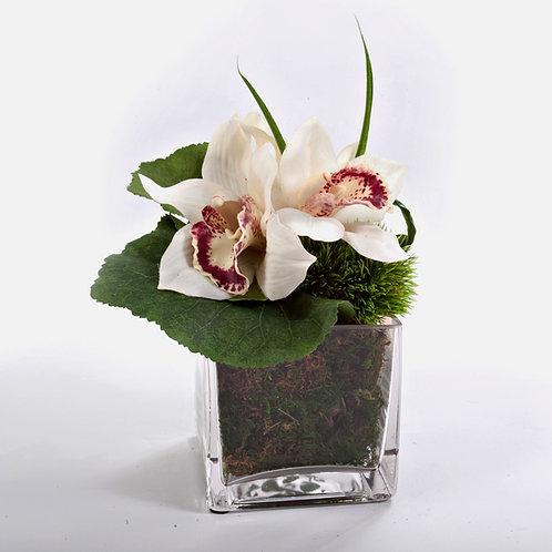 """2459 Cymbidium Orchid in 4"""" Glass Sq. 7x71/2"""