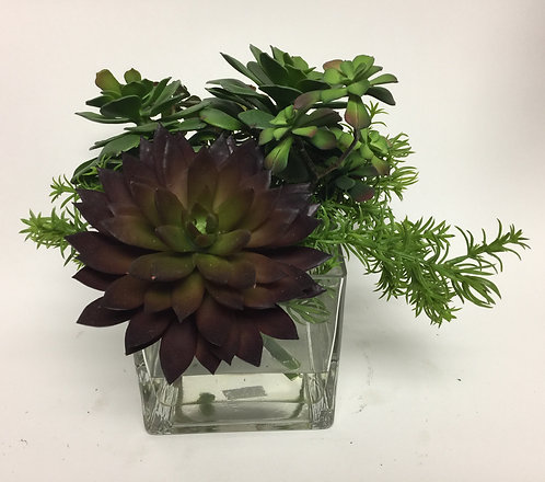 "3039 Succulents in 5"" Glass 11x10"