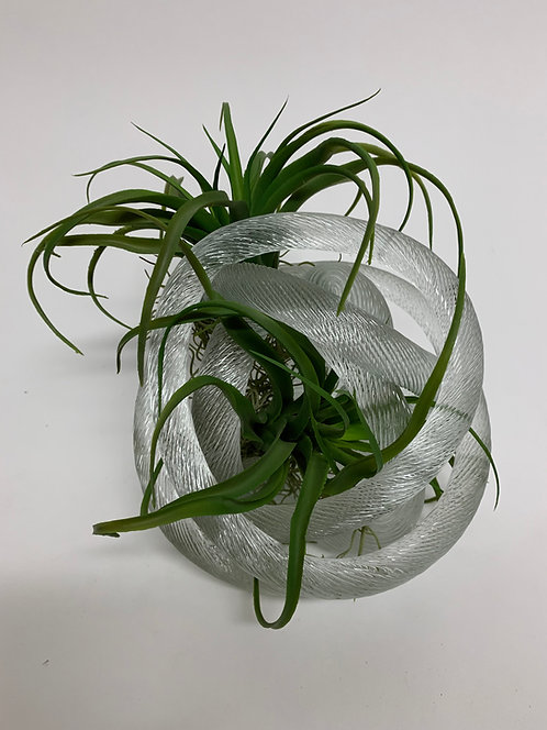 3193 GLASS KNOT TILLANDSIA