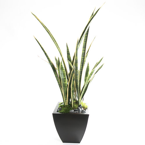 2688-VG Potted Sansevieria Varigated 47x21