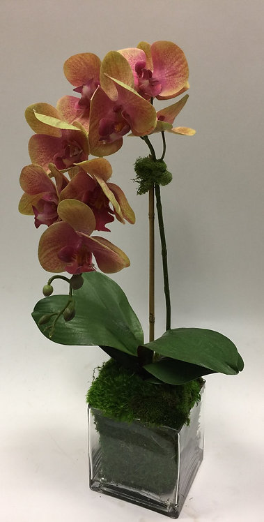 """2566 Pink/Green Phal in 6"""" Glass 12x28"""