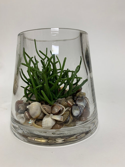 3114 SHELL/GREEN PENCIL CACTUS IN MD GLASS