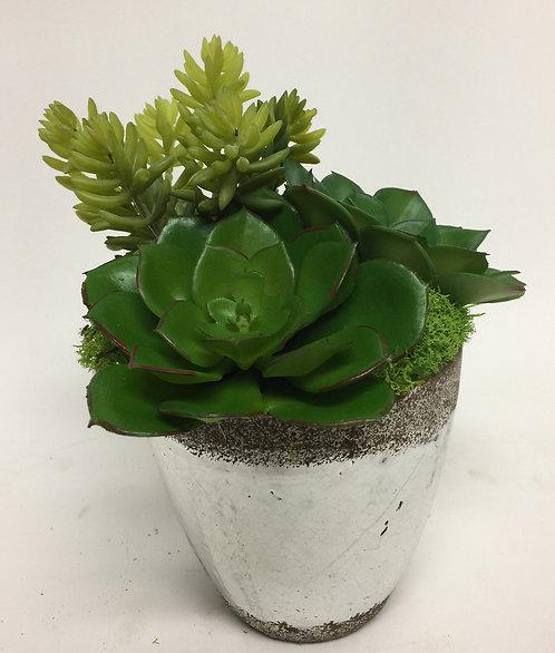 2612 Succulents in Sm Mercury Pot 7x5
