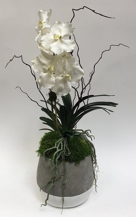 2582 Vanda Orchid in Pot 14X30