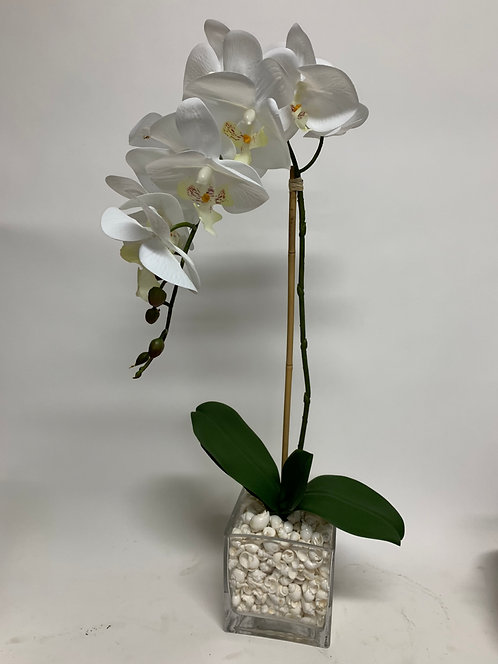 "3128 ORCHID IN 5"" CUBE SHELLS"