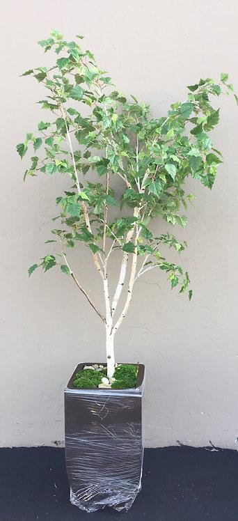 3140-7 7' Birch Tree in Tall Zinc