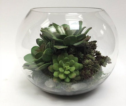 2767 Succulents in Md Bubble Bowl 9x9