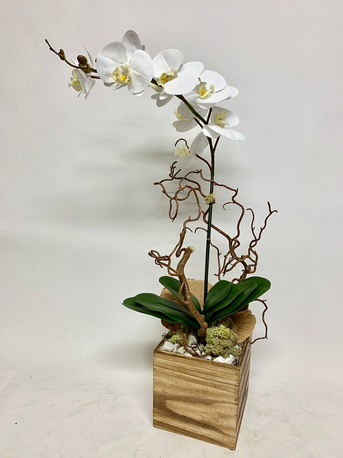 3016 ORCHID, MUSHROO, CURLY WILLOW IN WOOD BOX 15X26