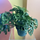 "Thumbnail: 8"" Swiss Cheese Plant with Vase"