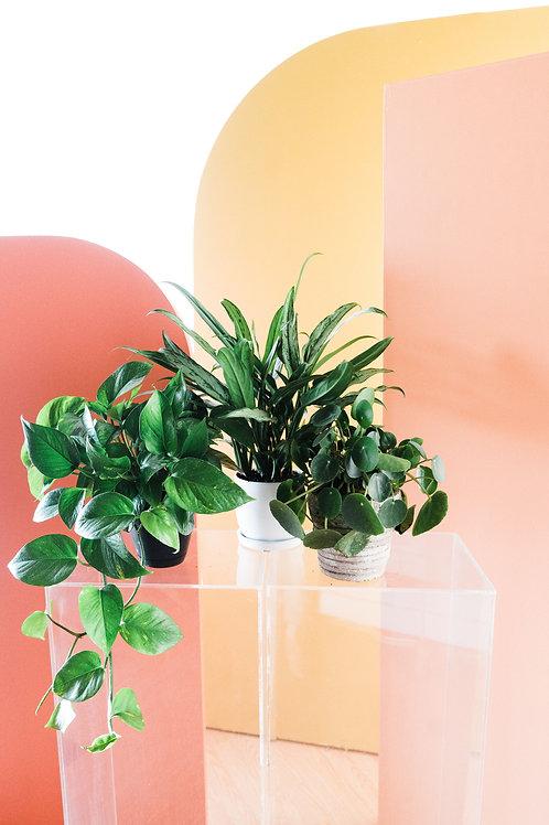 3 Month Plant Subscription