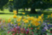 flower bed and lawn after the rain.jpg