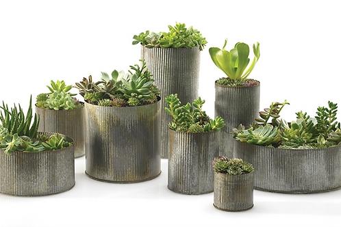 Norah Succulent Collection