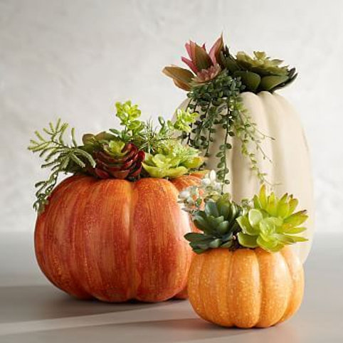 OH MY GOURD! a set of 3 pumpkins with faux succulents