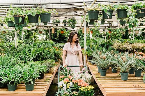 Designer's Choice - Cart full of 6 plants