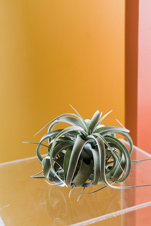 Large Airplant