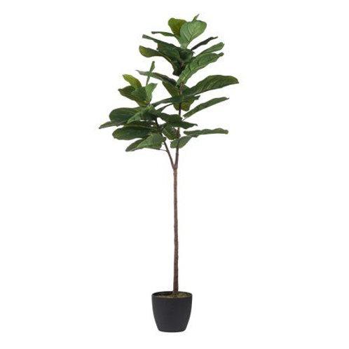5' Fiddle Leaf Fig Tree