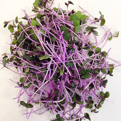 Red Cabbage Refill Kit