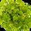 Thumbnail: Daikon Radish Microgreens Kit