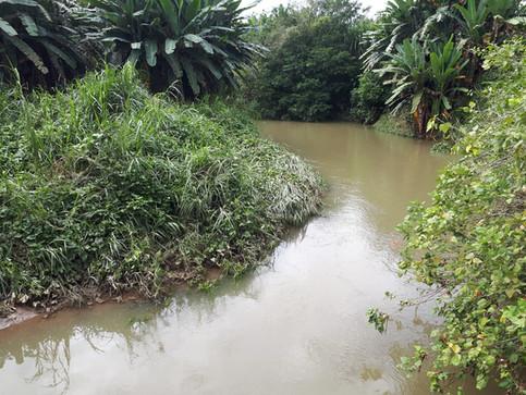 CNE reconstruirá diques en Matina para combatir inundaciones