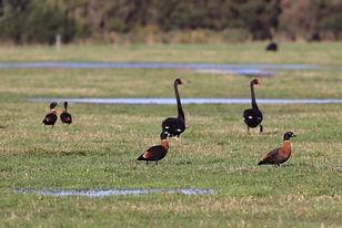 2020 Autumn image3 Wet paddocks copy.jpg